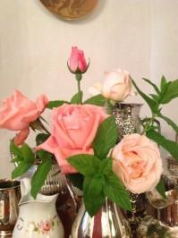 Rose di giardino della Signora Cristina