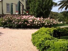 Bellissime rose nel Giardino della Signora Laura