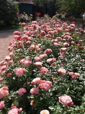 Fioriture nel Giardino della Signora Laura
