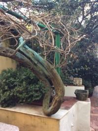 Il giardino della Sig.ra Marcella d'inverno