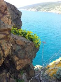passegiata_botanica2014 (1)